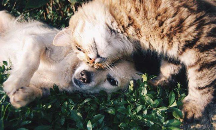 دراسة:الحيوانات الأليفة تقلل من خطر التأثيرات النفسية لكورونا
