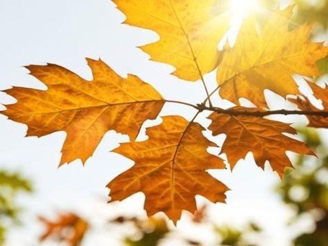 الطقس: انخفاض على درجات الحرارة مع بقائها أعلى من معدلها العام
