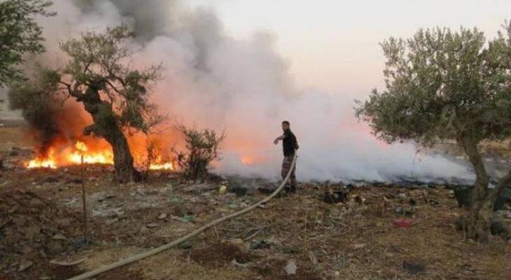 حريق يأتي على 60 شجرة زيتون في بلدة كفر ذان بجنين