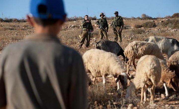 مستوطنون يعتدون على رعاة أغنام جنوب الخليل