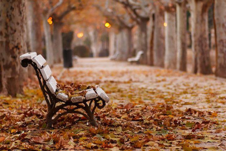 ما سر رائحة هواء فصل الخريف المميزة ؟