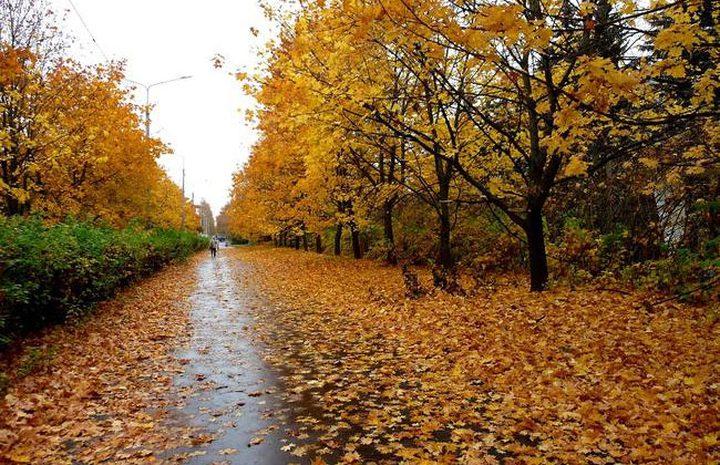 لماذا يشعر الناس بالمرض والاكتئاب في فصل الخريف ؟