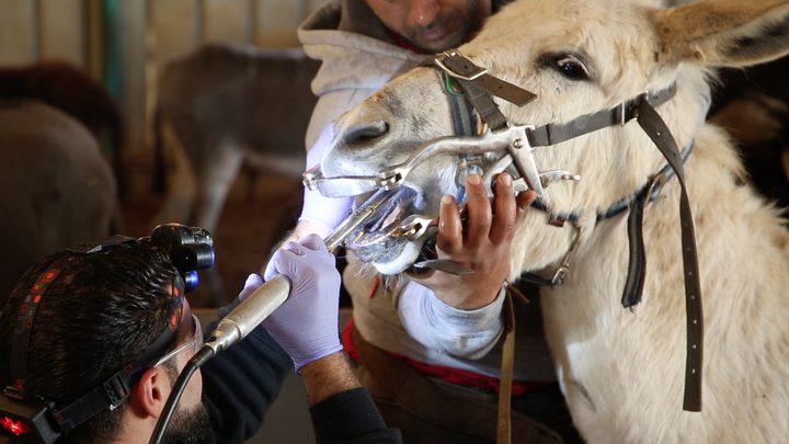 المركز الآمن للحيوانات... الأول من نوعه في فلسطين