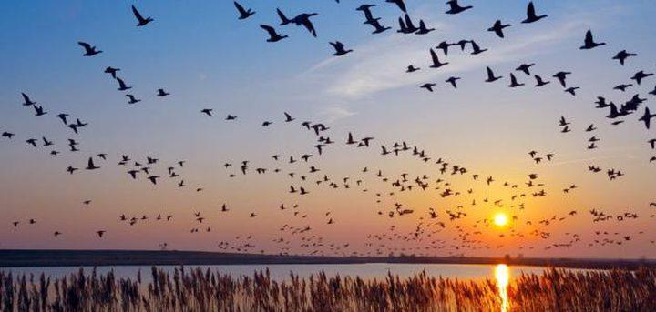 فلسطين تحتفي باليوم العالمي للطيور المهاجرة