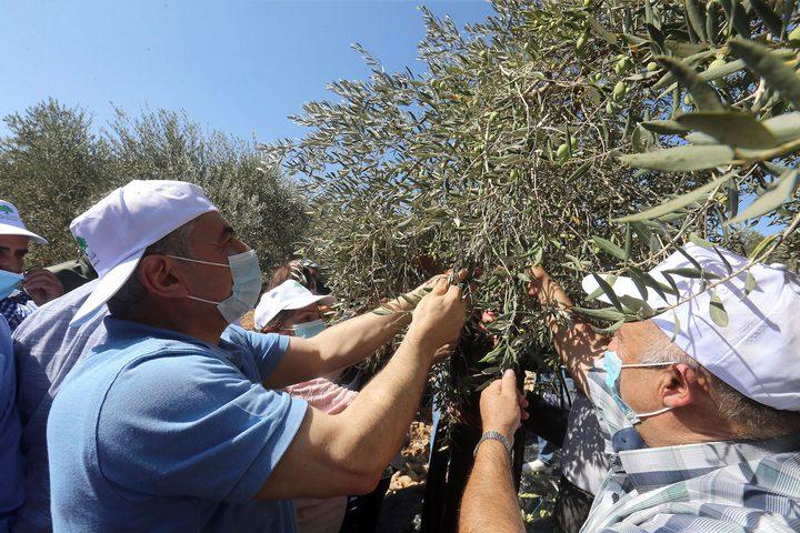 رام الله: اشتية يطلق موسم قطف ثمار الزيتون من بلدة بيرزيت