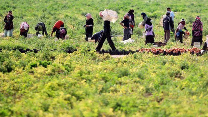 التنمية الاجتماعية تسلم  6 مشاريع تطويرية زراعية في طوباس