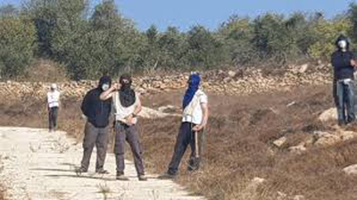 مستوطنون يهاجمون قاطفي الزيتون جنوب رام الله