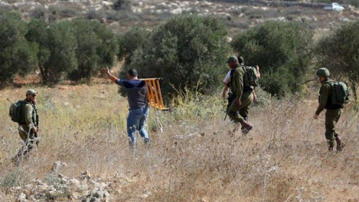 مستوطنون يسرقون ثمار الزيتون من أراضي قرية بورين