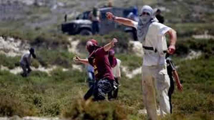 اصابة مواطنين عقب اعتداء مستوطنين على قاطفي الزيتون ببرقة