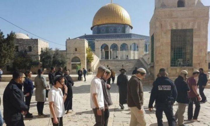74 مستوطنا يقتحمون المسجد الأقصى