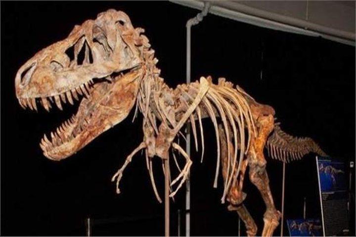 كندا.. صبي يكتشف بقايا ديناصور عمره 69 مليون عاما