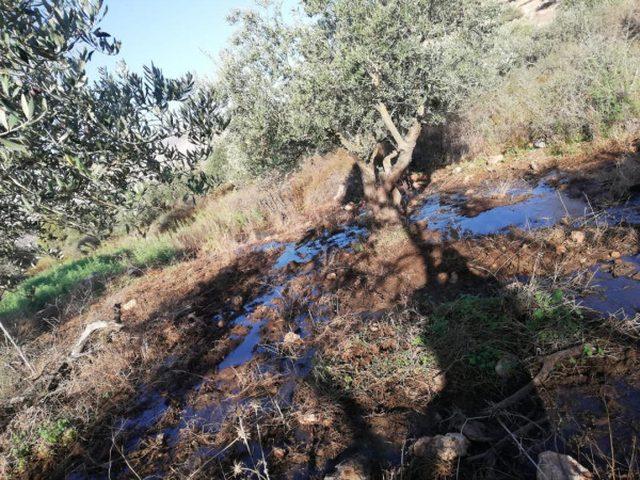 مستوطنون يغرقون أراضٍ شمال نابلس بالمياه العادمة