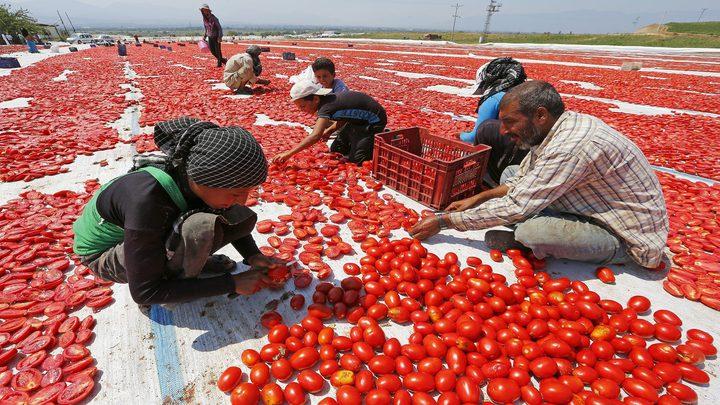 روسيا تحظر استيراد طماطم من المغرب