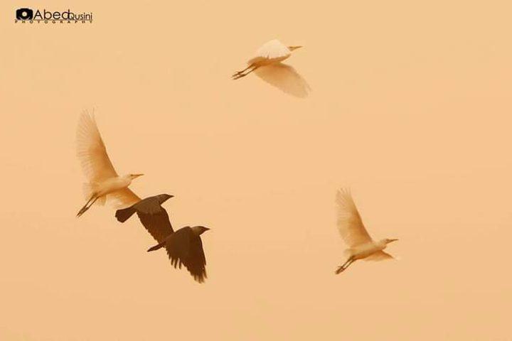 لقطات خريفية من الحياة والطبيعة في منطقة الأغوار الفلسطينية الشمالية عدسة : عبدالرحيم قوصيني