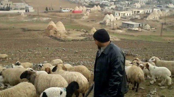النقب: مصادرة 150 رأس غنم من قرية أم بطين