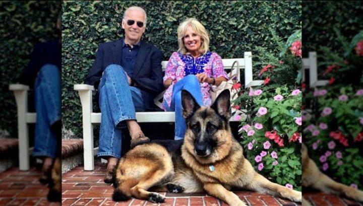 """""""ميجور"""" أول كلب يدخل البيت الأبيض!"""