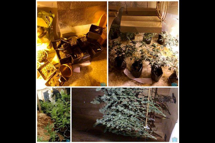 القدس: الشرطة تضبط مستنبتا لزراعة الماريجوانا المخدرة داخل منزل