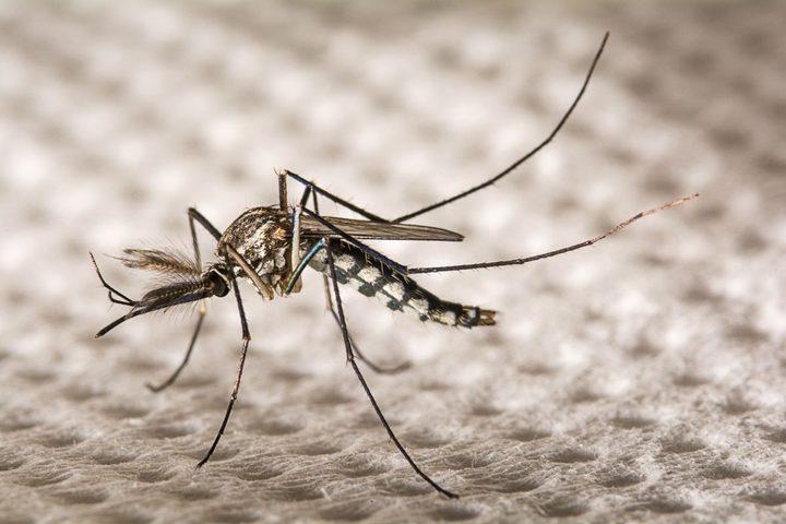 هل تنقل الحشرات فيروس كورونا ؟