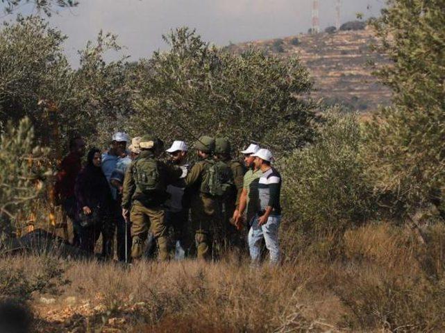 الاحتلال يعتدي بالضرب على مسن شمال الخليل