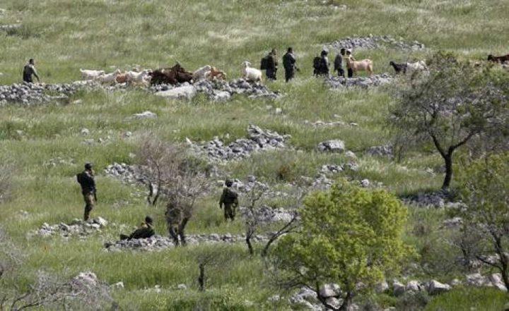 مستوطنون يهاجمون مزارعين شرق يطا
