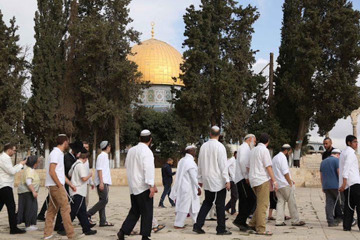 98 مستوطنا يقتحمون باحات المسجد الأقصى