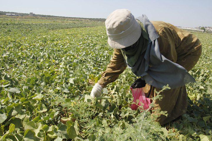 وزارة الزراعة: صرف دفعة مالية لـ88 مزارعا في المحافظات الجنوبية
