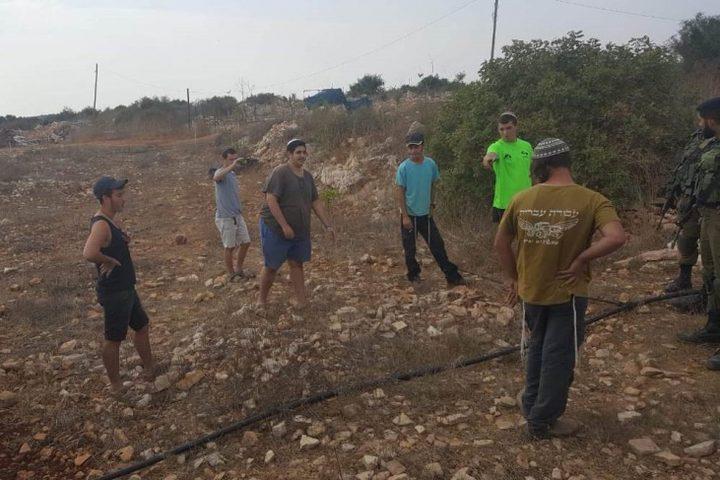 نابلس: مستوطنون يزرعون أشتال زيتون