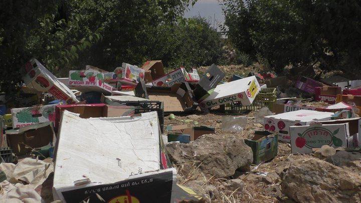الخليل: الاحتلال يتلف كميات من الخضار للمزارعين