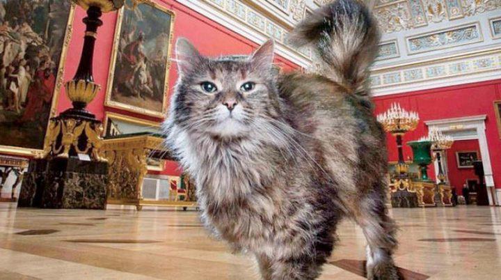 فرنسي يتبرع بجزء من ثروته كاملة للقطط في متحف الإرميتاج