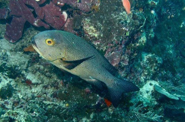 العثور على أكبر الأسماك عمرًا في العالم