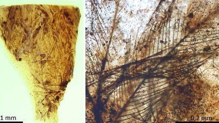 إكتشاف أقدم شعرة في العالم