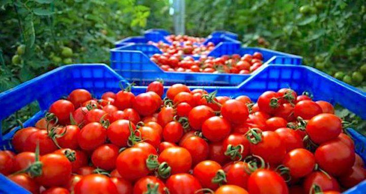 روسيا تحظر استيراد بعض الخضروات من أذربيجان