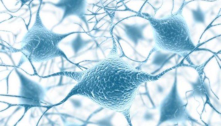 ما هو دور البكتيريا المغناطيسية في علاج الأورام ؟