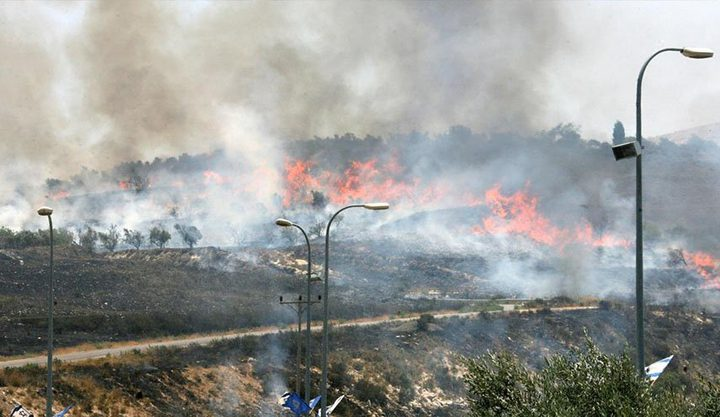 مستوطنون يحرقون مئات أشجار الزيتون جنوب الخليل
