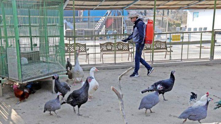 بسبب إنفلونزا الطيور.. إعدام حوالي6 مليون دجاجة في كوريا الجنوبية