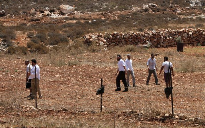 مستوطنون يقتلعون عشرات أشجار الزيتون ويسرقونها شرق يطا