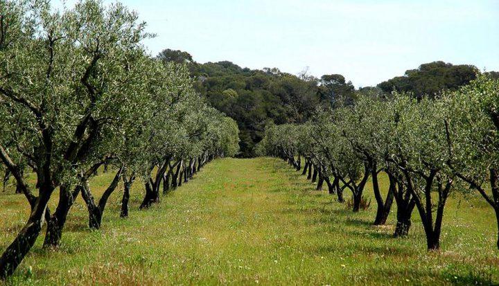 صبيحات: 19 ألف شجرة ستتم زراعتها في السادس من الشهر المقبل