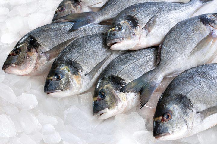 سلفيت:ضبط 350 كغم من الاسماك الفاسدة