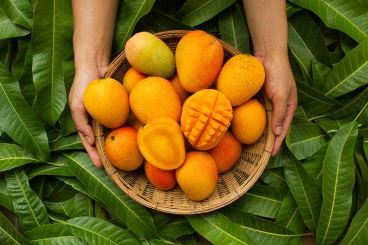 باحثون: فاكهة المانجو تخفض نسبة السكر في الدم