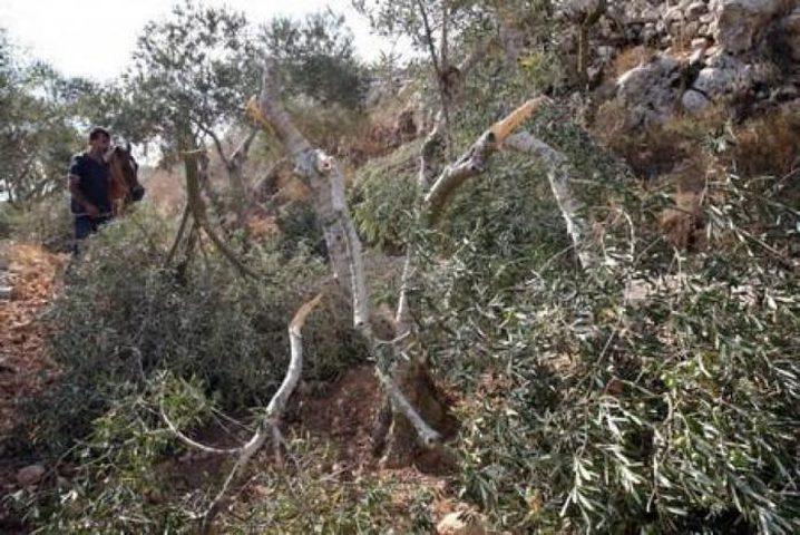 إعادة زراعة غابة عينون غدا ردا على مجزرة الاحتلال