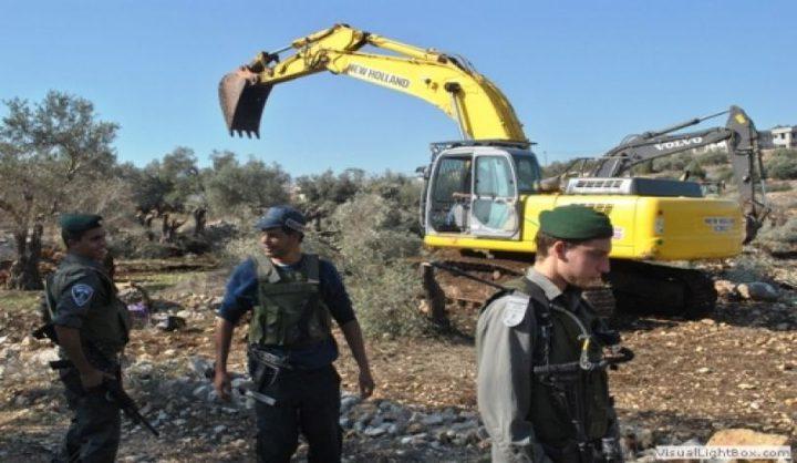 طوباس: الاحتلال يقتلع آلاف الأشجار في منطقة عينون