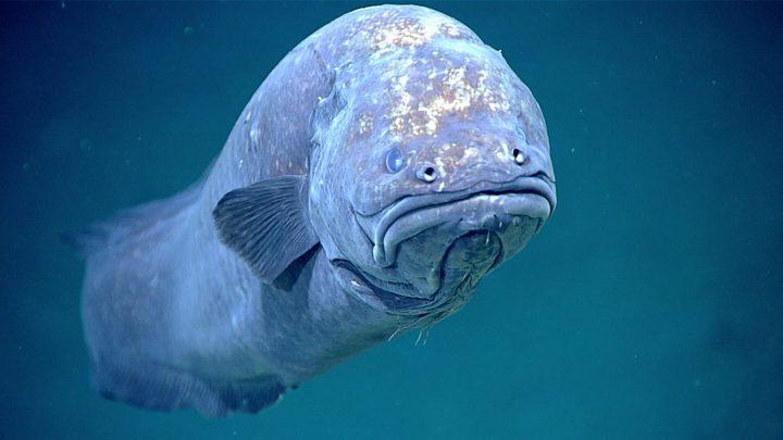 شاهد ثعبان البحر الغريب في المياه العميقة بخليج المكسيك