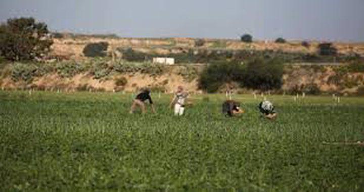 الاحتلال يستهدف المزارعين ورعاة الأغنام في غزة وخان يونس