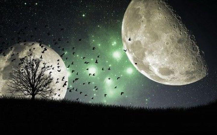 """ما هي """"أشجار القمر""""  وأين توجد على الأرض؟"""
