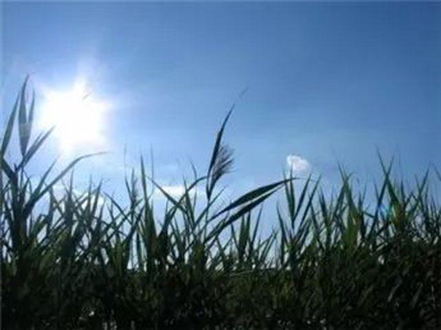 الطقس: أجواء صافية ودافئة حتى الإثنين