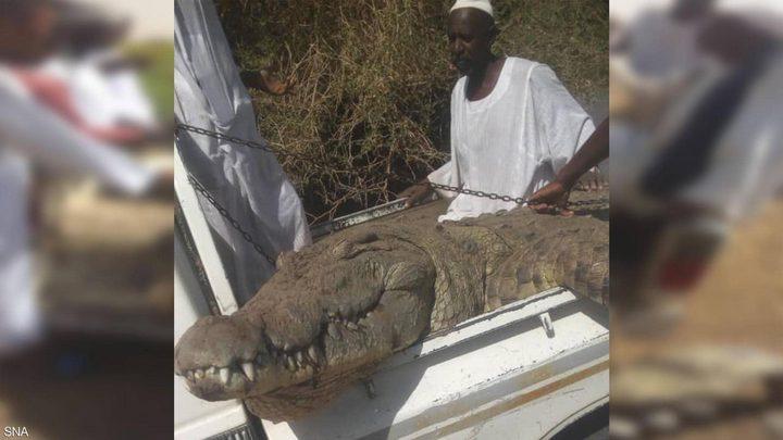 بالصور.. مزارع سوداني يصطاد تمساحا ضخما التهم شخصين