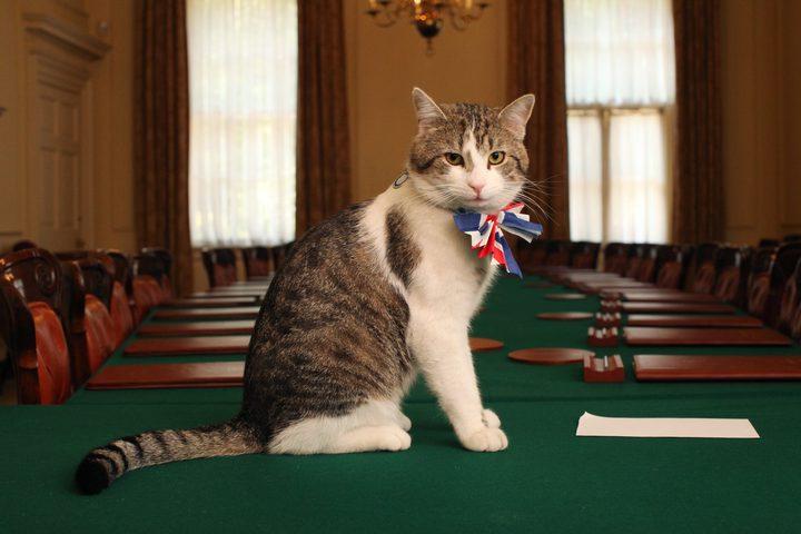 قط يحتفل بمرور عقد على توليه منصبا رسميا في لندن