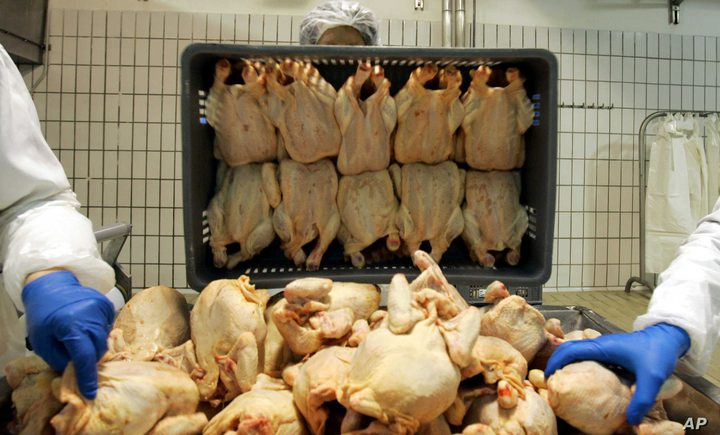 """بعد الإبلاغ عن ضحايا.. دجاج """"ملوث"""" يثير الهلع في بريطانيا"""