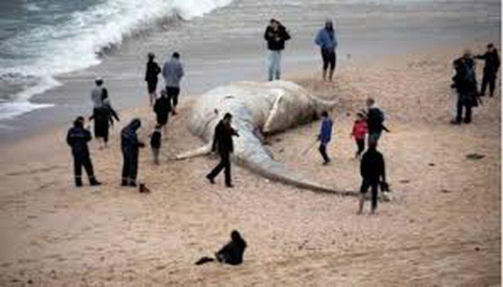 الاحتلال يحظر نشر تفاصيل الكارثة البيئية في السواحل