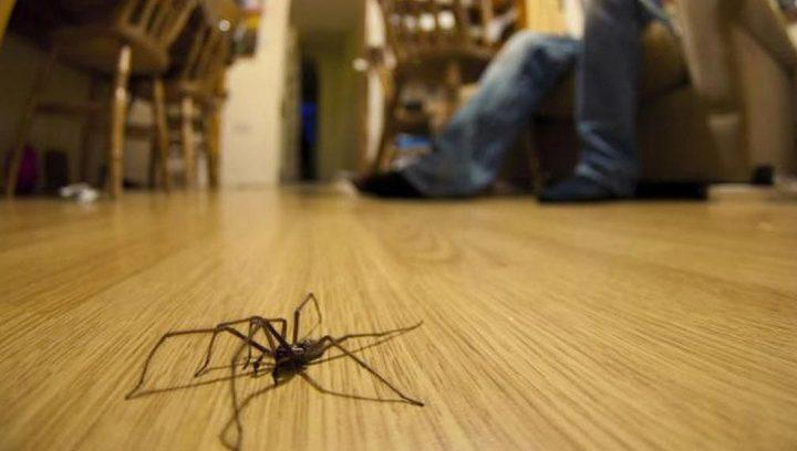 عثر على عنكبوت في بيته.. لكنه واجه موقفا صادما ومرعبا
